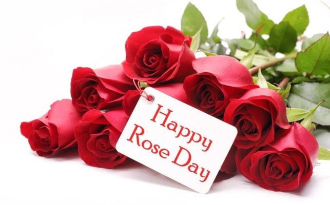 Happy Rose day Whatsapp Messages for 2018 | Wishes | Status